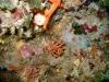faux-corail
