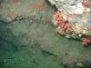 corail-rouge-et-mostelle